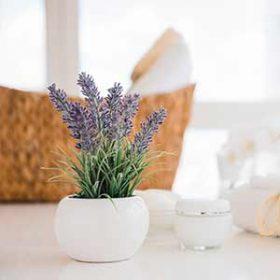 שתיל עציץ של צמח לוונדר למקלחת - יפה, ריחני ועיצוב שיק!